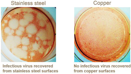 Norovirus unable to infect host cells after 2 hours exposure to copper surfaces at room temperature.
