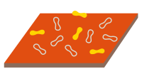 Surface bacteria
